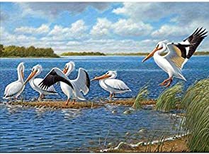 5D Full Drill Diamond Painting Kit,Full Round Mosaic DIY 5D Diamond Embroidery Bird Pelicans Full Round Diamond Painting C...