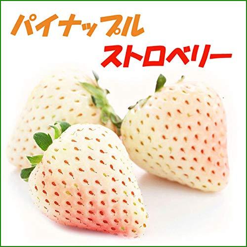 『パインベリー/パイナップル・ストロベリー イチゴ苗 4個セット』パイナップル&ストロベリー味のホワイトイチゴ♪