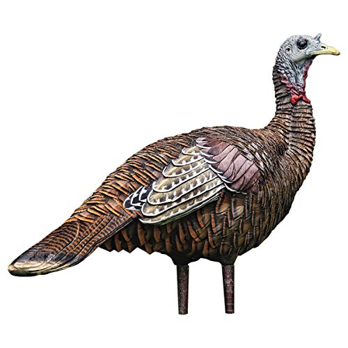 Avian-X Lookout Hen Turkey Decoy, Lifelike Collapsible Decoy, Multi, Model:8006
