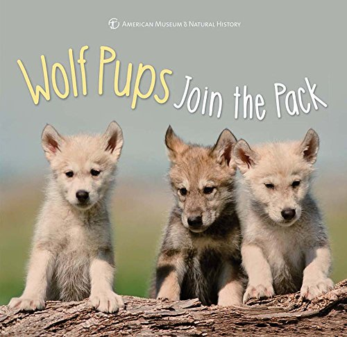 Wolf Pups Join the Pack (First Discoveries)