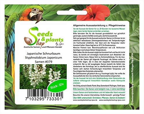 Stk - 10x Japanische Schnurbaum Styphnolobium Japonicum Samen #379 - Seeds Plants Shop Samenbank Pfullingen Patrik Ipsa