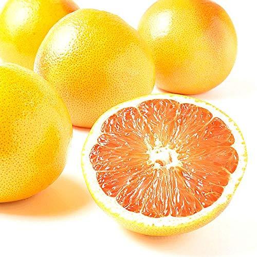 国華園 南アフリカ産 グレープフルーツ 赤 10玉 1組 柑橘