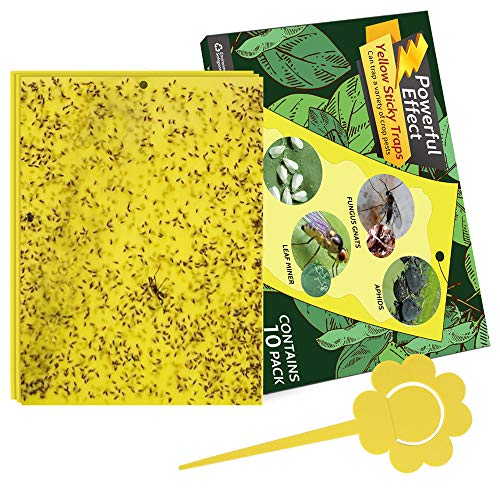 Kensizer 10-Pack Dual-Sided Yellow Sticky Gnat Traps for Indoor/Outdoor Flying Plant Insect Like Fungus Gnats, Whiteflies, Aphids, Leaf Miners, Thrips, Other Flying Plant Insects - 6x8 Inches