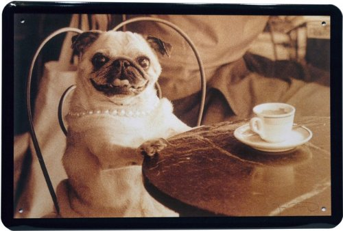 Metalen bord dier hond mops met koffie 20 x 30cm reclame retro blik 984