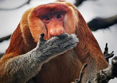 Primate Mono Narigudo 1000 Piezas De Rompecabezas para Adultos Juego Educativo De Ocio para Niños