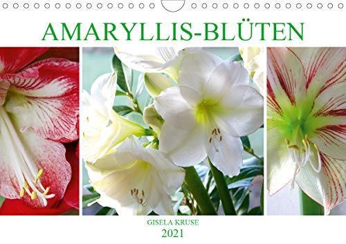 Amaryllis-Blüten (Wandkalender 2021 DIN...
