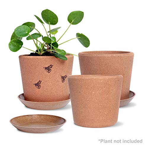 Wild Pact Set of 3 Cork Plant Pots 5.5' + Rice Hull Saucers - Drainage Hole - Garden Planters for Indoor and Outdoor Flowers, Herbs, Succulents - Environmentally Friendly and Sustainable - Gift Set