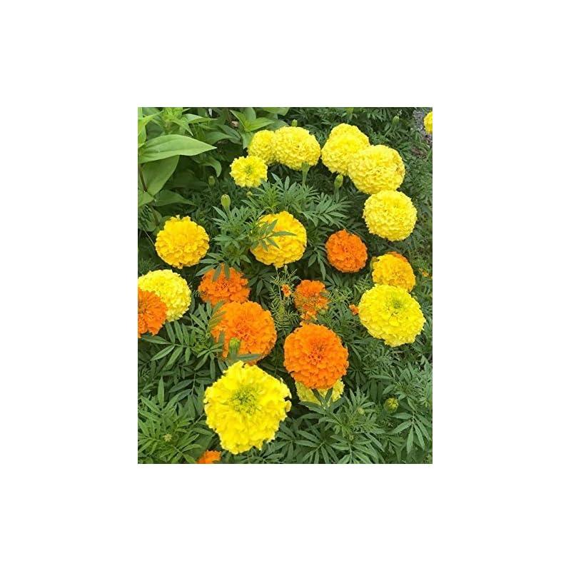 silk flower arrangements 100 pcs mixed marigold zinnia flower seeds color plant grass bonsai garden decoration