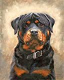 Paint by Numbers Kit for Adults Beginner DIY Oil Painting 16x20 inch - German Rottweiler, Drawing with Brushes Christmas Decor Decorations Gifts (Without Frame)