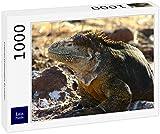 Lais Puzzle Iguana Galapagos Ecuador 1000 Pezzi