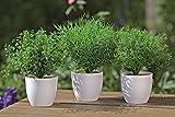 Dapo 3 x Dekopflanze im weissen Topf Kunstpflanze Dekoration Dekogras Pflanze Dekoration