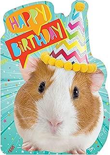 Paper House Guinea Pig in Birthday Hat Die Cut Foil Cute Birthday Card for Kids