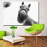 SADHAF HD imprimir imagen pared arte caballo blanco nariz fondo pintura hogar habitación decoración A5 60x90cm