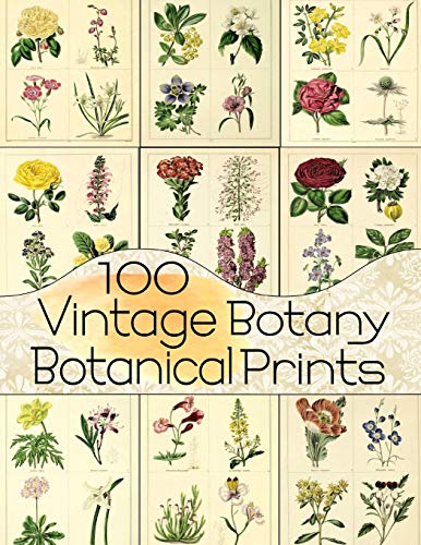 Compare Textbook Prices for 100 Vintage Botany Botanical Prints Floral Ephemera Series  ISBN 9781723879944 by Anders, C.