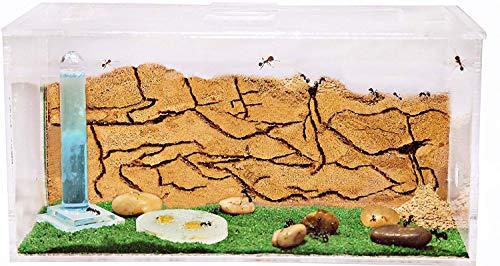 AntHouse - Natürliche Ameisenfarm aus Sand - Acryl Starter Set 20x10x10 cm (Gratis Ameisen)