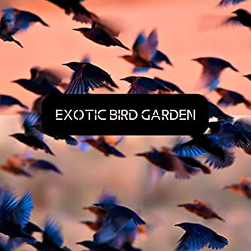 Exotic Bird Garden - Stunning Sounds of Tropical Bird Species