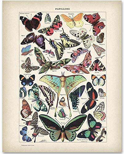 Vintage Butterflies Illustration - 11x14 Unframed Art Print - Makes a Great Home and Bathroom Decor and Gift Under $15 for Butterfly Lovers