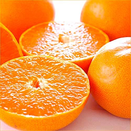 糖度:13度 高級みかん「せとか」 約3�s 8-15入 糖度センサー識別 愛媛・大分産 豪華専用化粧箱 お歳暮 お年賀 ギフト 贈答品 プレゼント Orange
