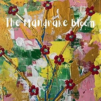 The Mandrake Bloom