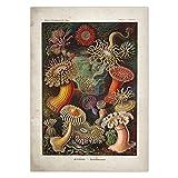 Misszhang Póster Vintage Medusas Corales Algas Verdes Anémonas De Mar Chorros Estrella De Mar Pared Arte Lienzo Pintura Póster E Impresión Sin Marco S2490 40X60Cm
