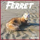 Ferret Calendar 2022: 2021-2022 Ferret Weekly & Monthly Planner   2-Year Pocket Calendar   19 Months   Organizer   Agenda   Appointment   For Ferret Lovers