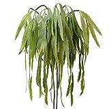 2 plantas artificiales de eucalipto, hojas de follaje de eucalipto de imitación para colgar cestas,...