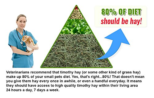 "Small Pet Select 1st Cutting ""High Fiber"" Timothy Hay Pet Food, 4.54 kg 3"