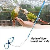 Sheens 1.2 M Ajustable Pequeño Tamaño Aves Arnés Correa Anti mordida Mascotas Aves Cinturón Mordida Cuerda de Entrenamiento Aire Libre arnés y Correa(Azul)