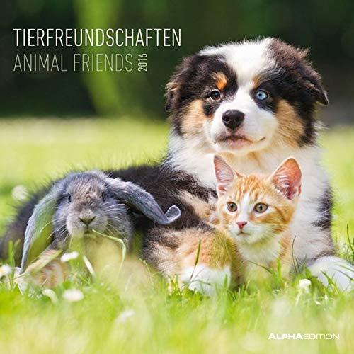 Tierfreundschaften 2016 - Animal Friends - Broschürenkalender (30 x 60 geöffnet) - Tierkalender - Wandplaner