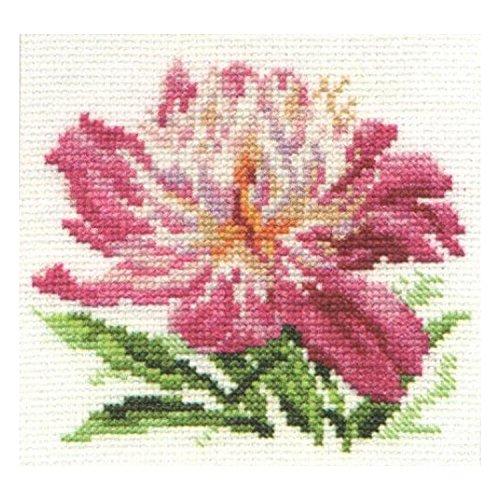 Alissa kit de point de croix – Pivoine Rose