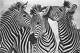 JRLDMD Cuadro de Cebra Cuadro de Lienzo nórdico Blanco y Negro Impresión de Arte en la Pared Cartel de Animal Encantador para Dormitorio nórdico Decoración Dulce para el hogar 60x120cmx1 Sin Marco