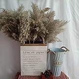 60cm Pampas Gras Getrocknete Blume Reed Hochzeit Dekoration Heu Herbst Home Natürliche Dekoration Blumenstrauß Retro Blume Getrocknete Blumen (Color : 20 Pieces, Size : 60cm) - 7