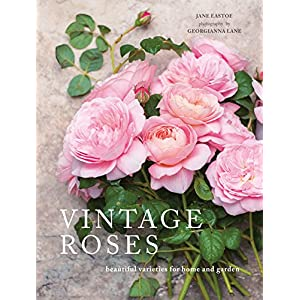Vintage Roses: Beautiful varieties for home and garden (Beautiful Varieties/Home/Gardn)