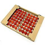 国産 夏いちご 1.2kg Sサイズ (35粒) 300g×4トレー サマープリンセス サマーリリカル すずあかね 苺 イチゴ 果物 フルーツ ギフト ストロベリー 業務用