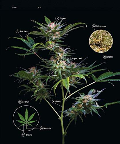 51szUq7WqFL - Green: A Field Guide to Marijuana: (Books about Marijuana, Guide to Cannabis, Weed Bible)