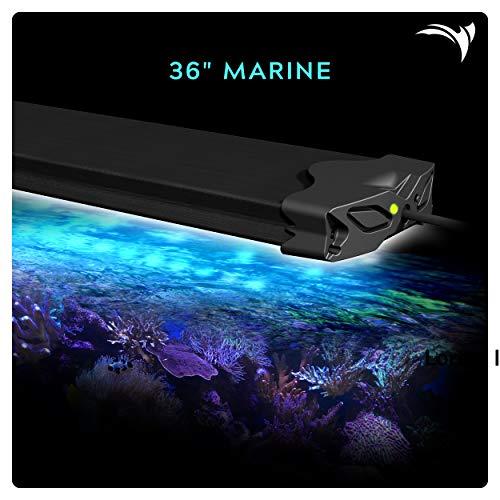 Aquatic Life Edge WiFi LED Aquarium Light, 36-Inch Marine