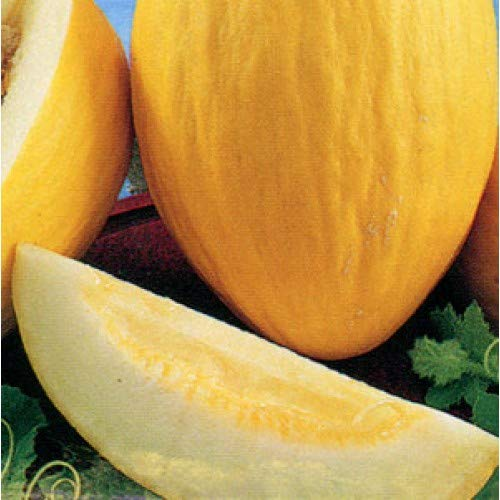 35 PCS ORGANIC Hami Melon Seeds E60,...