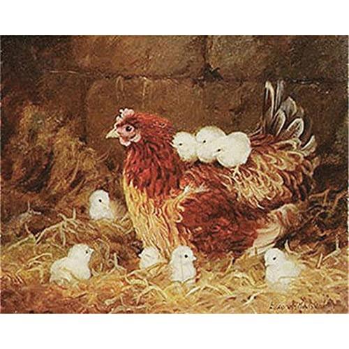 ZXDA Frameless DIY Kit de Pintura al óleo por números para Adultos gallos Pintura de Animales por número Pintado a Mano Decoración de Pared Artcraft Único A10 50x70cm