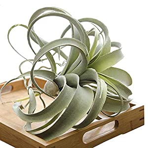 Silk Flower Arrangements YWXKA Realistic Artificial Plants,Real Touch Succulent Greening Plants,for Indoor Outdoor Garden Bathroom Decor Upotted,13Inch(Green)