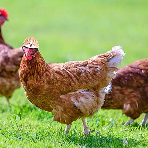 Huisdierhelmen Kippenhelmen Vogelhoed Hoofddeksels Vogelhoed Hoofddeksel Kippenhelm Grappige huisdierenhelm Kostuums Accessoires voor kip Kleine huisdierenhelm Geschikt voor kippen