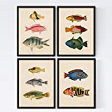 Set de 4 láminas de peces coloridos efecto vintage. Cantabrico. Composicion de 11 peces diferentes en tamaño A3, fondo papel antiguo vintage . Con Marco