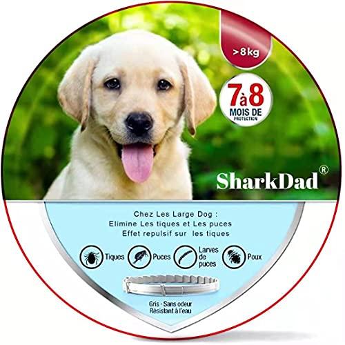 Collare Antipulci Cane,SharkDad collare antipulci per cani e gatti Trattamento antipulci regolabile e impermeabile per cani e gatti di taglia piccola, media e grande