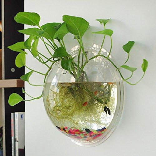 Demiawaking Vaso per Piante da Parete Acquario in Acrilico a Muro Decorazione Domestica (Trasparente)