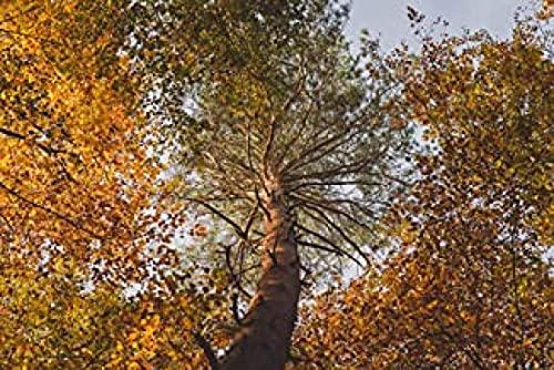 HJHJHJ Rompecabezas para Adultos 3000 Pieza de otoño árboles Madera Rompecabezas para Adultos 3000 122x81cm