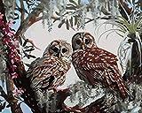Pinturas al óleo digitales de bricolaje para adultos y niños pintadas con pintura al óleo digital set de regalo preimpreso lienzo artista decoración-Dos lechuzas 45x60cm
