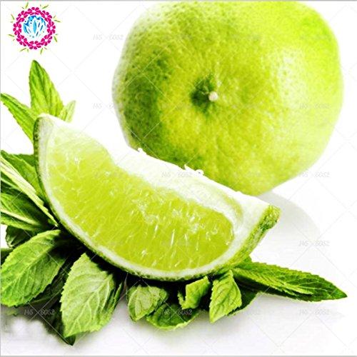 10 PCS / SAC citronnier rouge est également graines de fruits bio orange sanguine bonsaï graines de citron vert rouge pot sain plantes potagères grand alimentaire 1