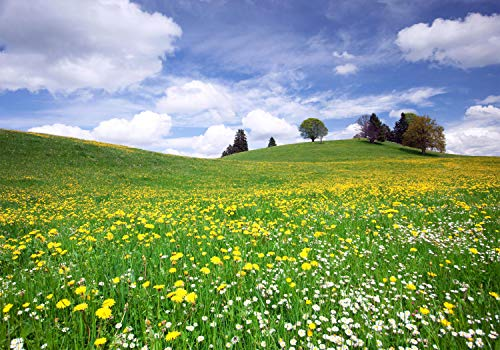 wandmotiv24 Fototapete Sommerwiese Hügel Blumenwiese S 200 x 140cm - 4 Teile Fototapeten, Wandbild, Motivtapeten, Vlies-Tapeten gelbe, Blüten, weisse, Blumen M0335
