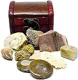 Dente di mosaico originale, cacca di dinosauro, osso di dinosauro, trilobite e ammoniti, i fossili possono variare Studio dei fossili Libretto incluso! Ottimo set regalo fossile per collezionisti di bambini e adulti Cassettiera in legno fatta a mano,...