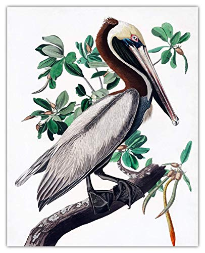 Brown Pelican Wall Art Print - (8x10) Unframed Picture For Home, Office, Dorm & Chic Bedroom Decor - Great Gift Idea Under $15