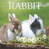 Rabbit Calendar 2022: Monthly Square Calendar 2022-2023, 16 Month Calendar, Cute Animal Calendars, Home And Office Calendar For women And Men